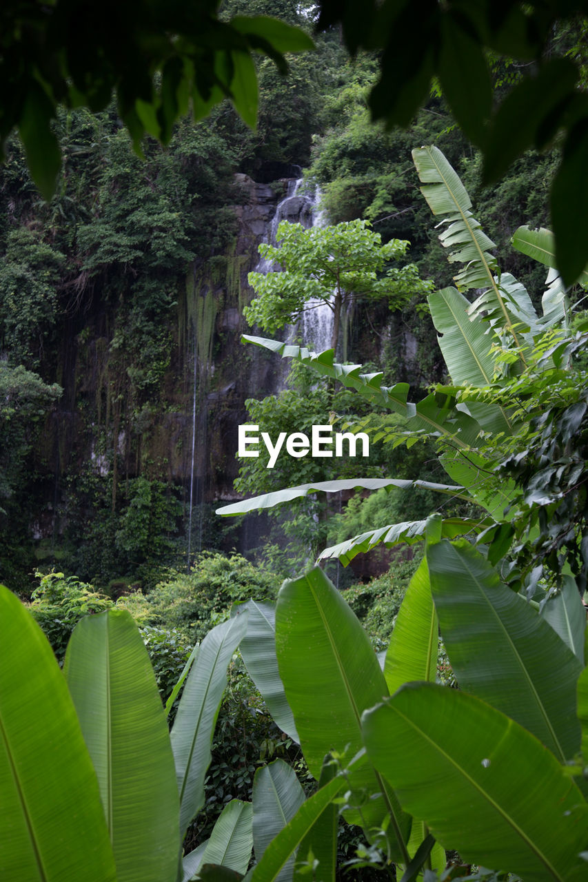 leaf, growth, green color, plant, nature, beauty in nature, water, no people, day, outdoors, banana tree, tranquility, waterfall, scenics, forest, freshness, tree, close-up