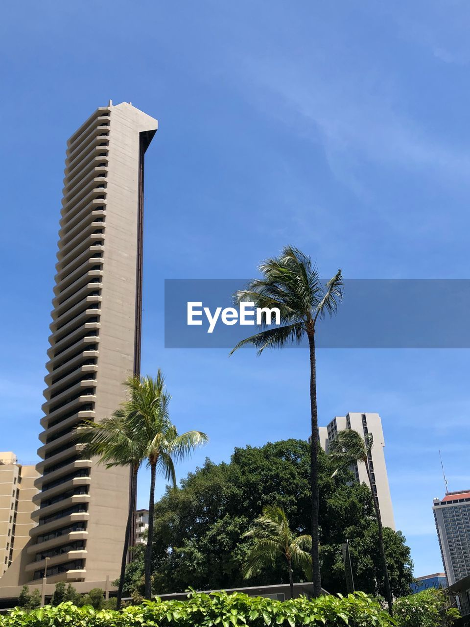 tree, plant, tropical climate, palm tree, architecture, sky, built structure, building exterior, nature, low angle view, growth, building, tall - high, no people, day, city, sunlight, outdoors, office building exterior, tower, coconut palm tree, skyscraper, tropical tree, palm leaf