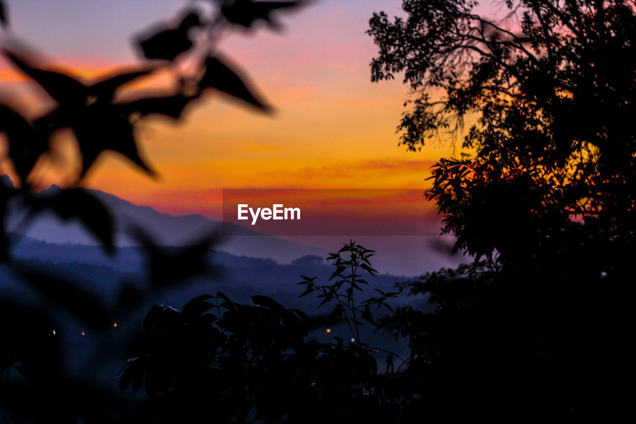sunset, plant, sky, beauty in nature, tree, silhouette, scenics - nature, growth, tranquility, tranquil scene, nature, no people, orange color, leaf, outdoors, non-urban scene, close-up, idyllic, plant part, branch