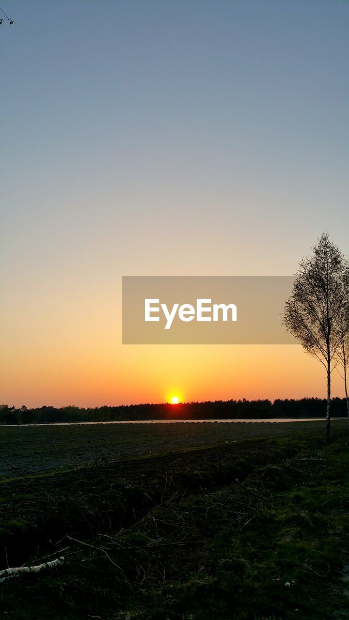 landscape, field, sunset, tranquil scene, nature, tranquility, agriculture, tree, beauty in nature, scenics, outdoors, clear sky, rural scene, no people, sky, growth, day