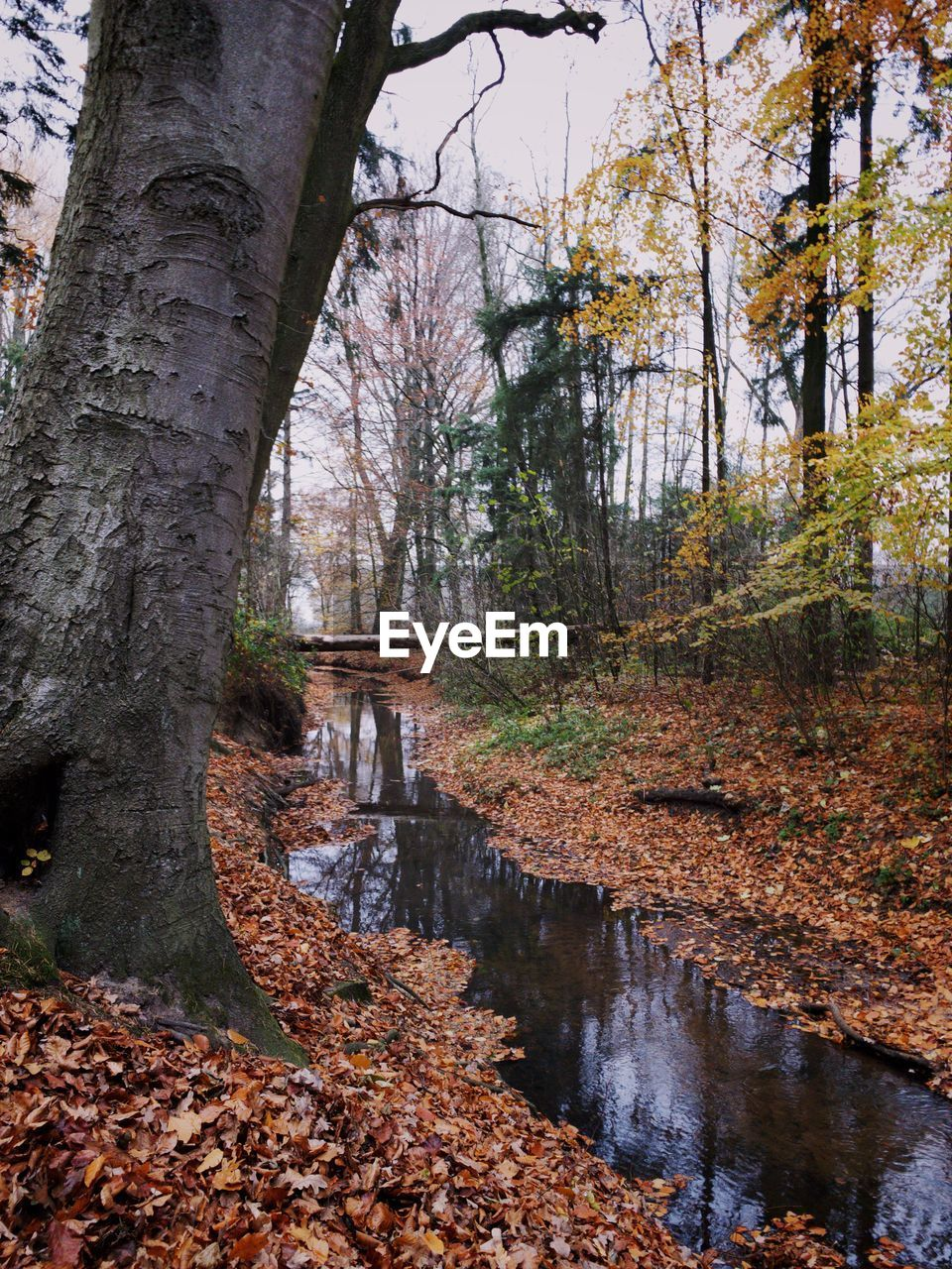 tree, autumn, water, change, plant, nature, reflection, no people, day, trunk, forest, tree trunk, tranquility, leaf, plant part, land, scenics - nature, beauty in nature, outdoors, stream - flowing water, woodland, fall, canal, flowing, leaves
