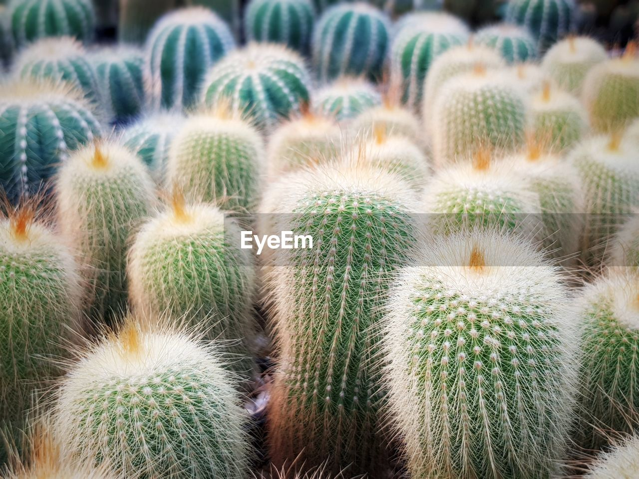 succulent plant, cactus, thorn, growth, no people, green color, plant, sharp, close-up, barrel cactus, nature, spiked, focus on foreground, full frame, potted plant, beauty in nature, day, outdoors, backgrounds, land, climate, arid climate, ecosystem