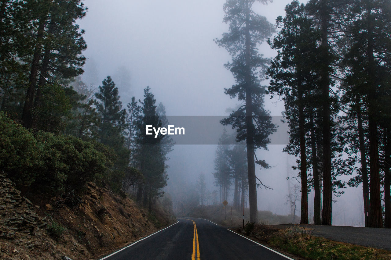 Empty Road In Foggy Weather