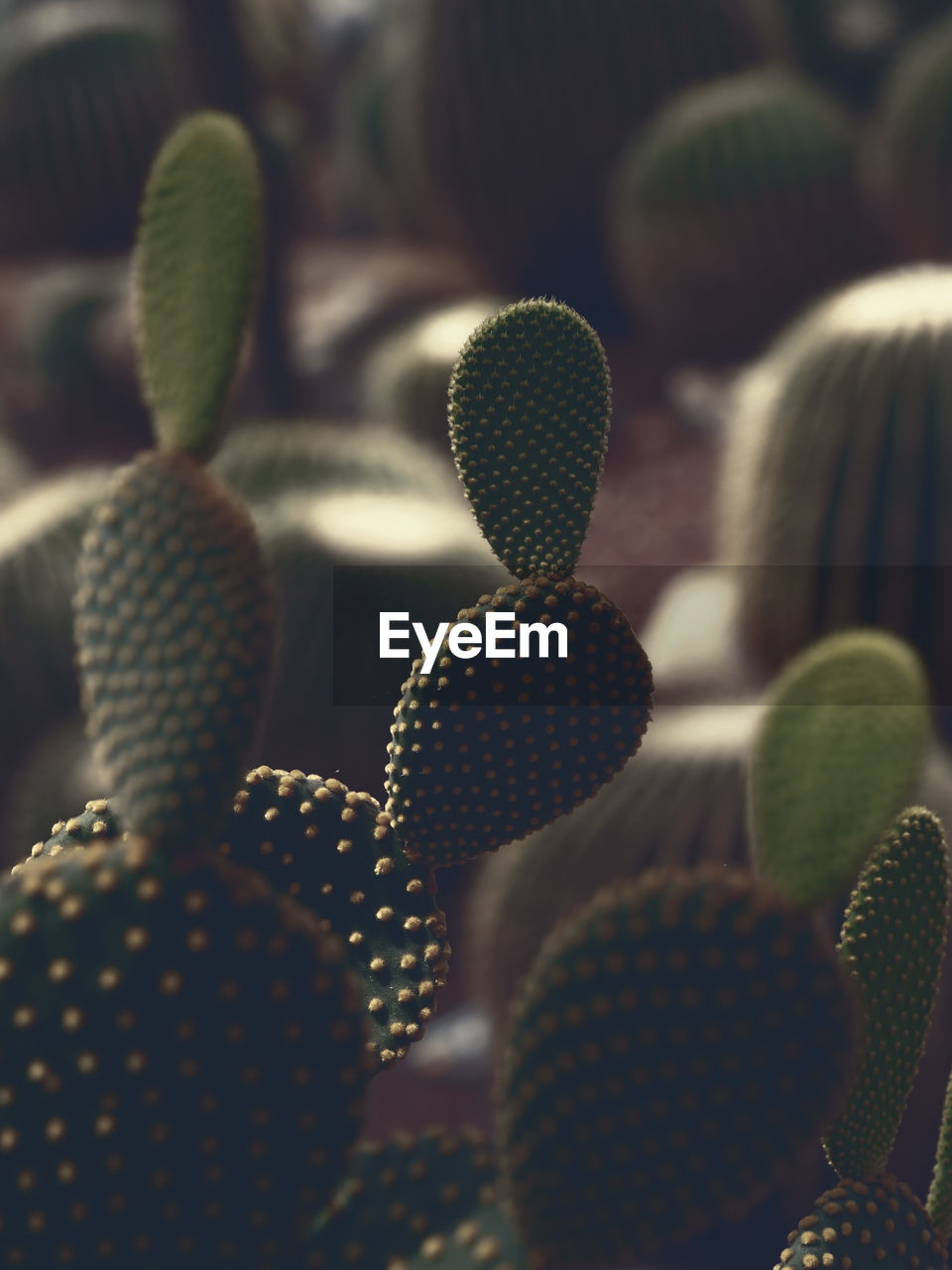 Close-Up Of Cactuses