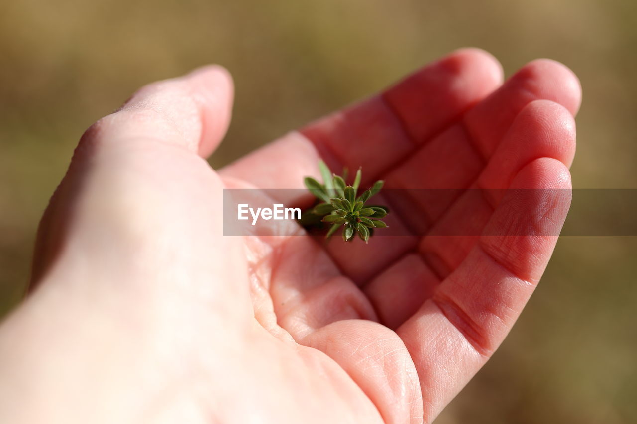 human hand, hand, human body part, holding, body part, one person, unrecognizable person, real people, close-up, finger, selective focus, human finger, personal perspective, palm, plant, day, focus on foreground, lifestyles, nature, small
