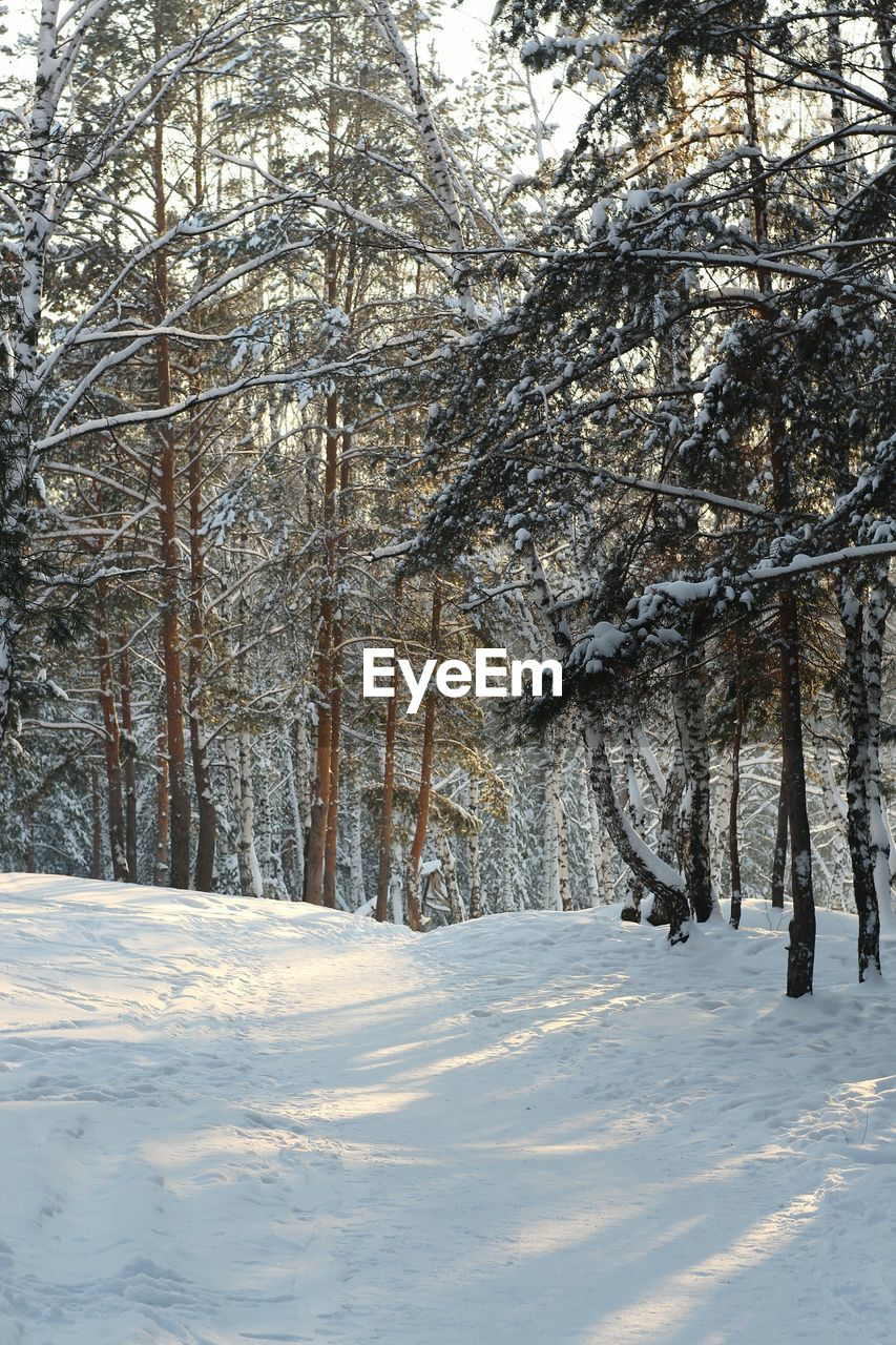 snow, winter, cold temperature, tree, nature, beauty in nature, weather, tranquil scene, scenics, tranquility, white color, no people, landscape, outdoors, day, bare tree, snowing, sky