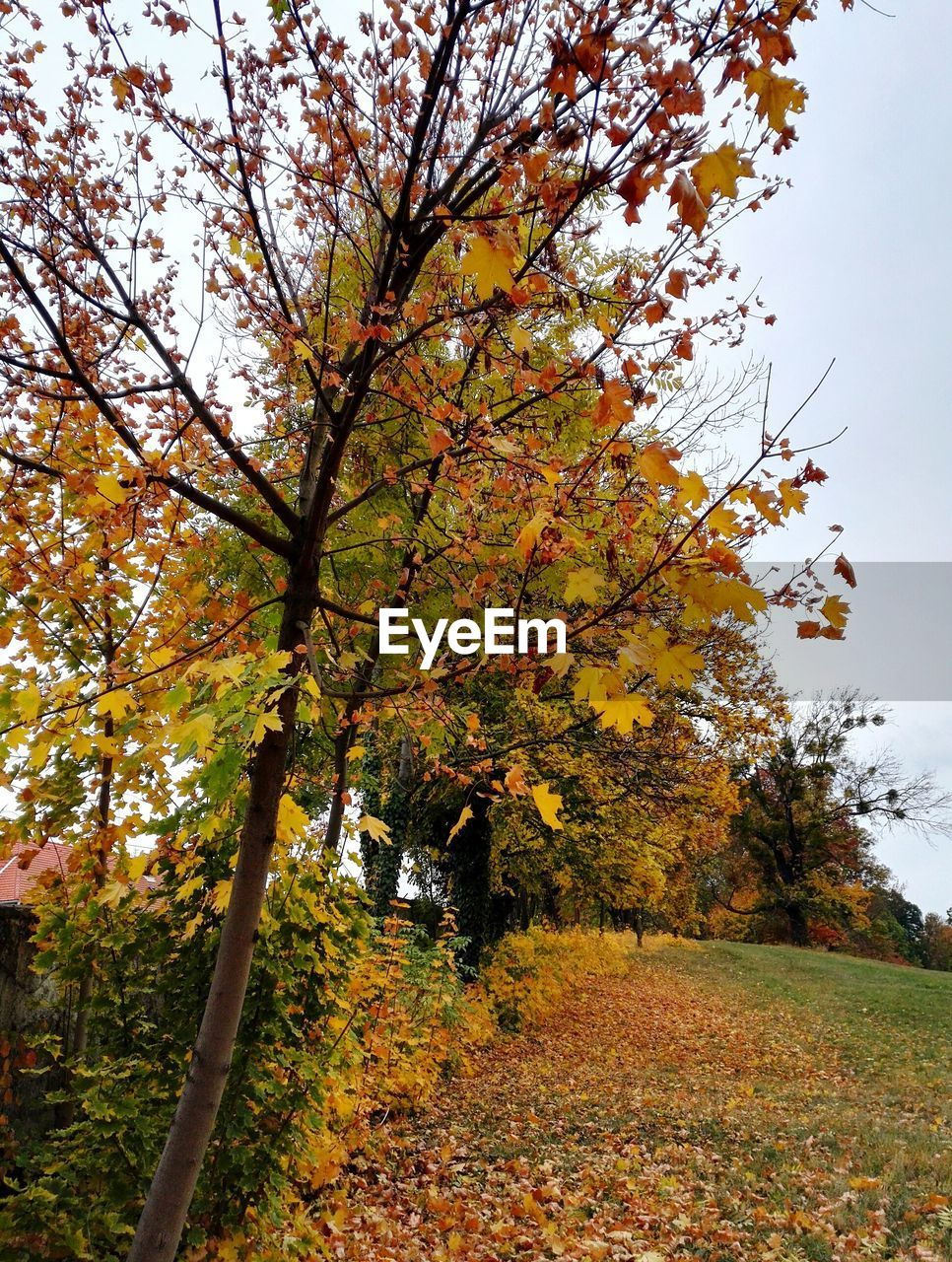 autumn, tree, change, plant, beauty in nature, orange color, nature, growth, leaf, tranquility, plant part, no people, sky, day, tranquil scene, land, scenics - nature, outdoors, branch, landscape, fall, autumn collection, natural condition, leaves