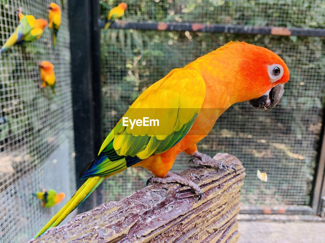 vertebrate, animal themes, animal, bird, animal wildlife, parrot, animals in the wild, cage, perching, animals in captivity, focus on foreground, one animal, no people, day, close-up, birdcage, metal, parakeet, zoo