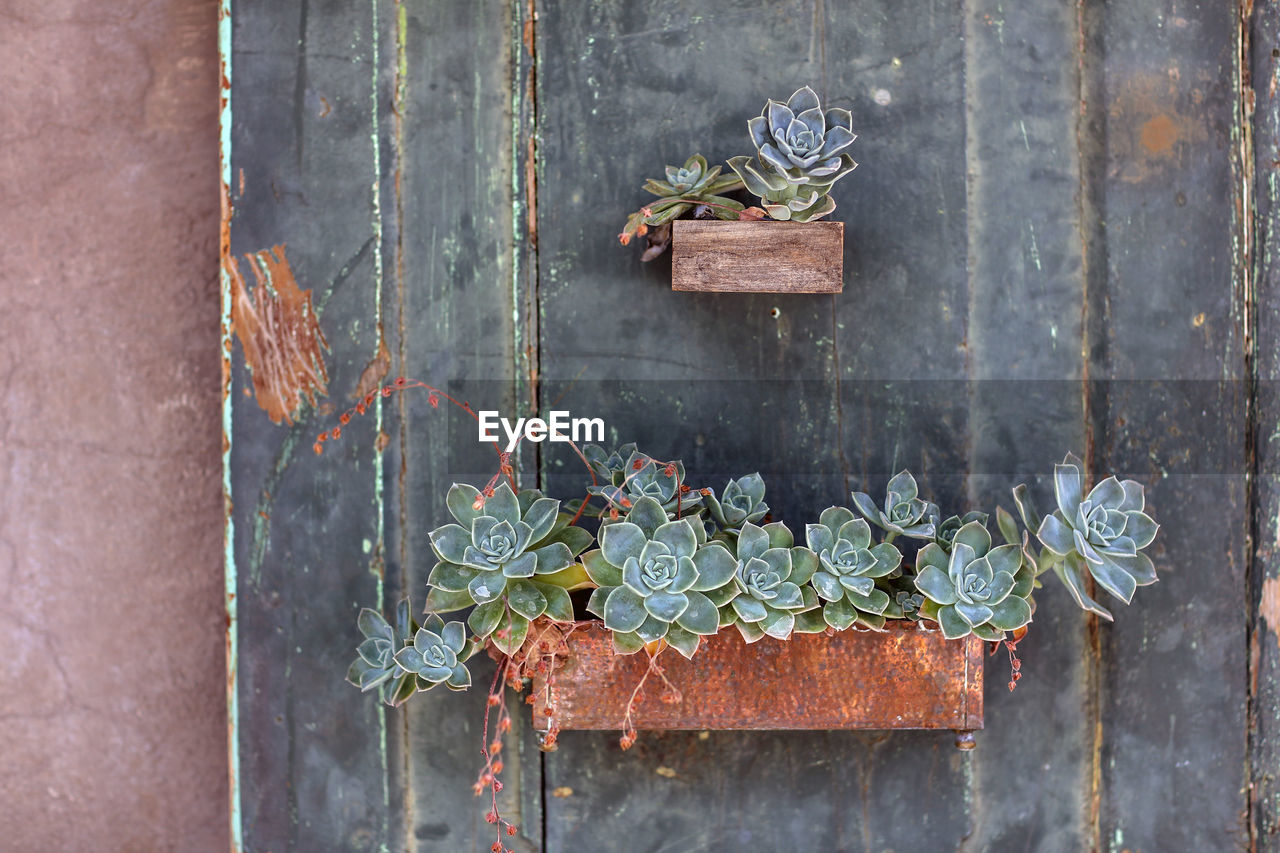 View Of Succulents Plants On Wall