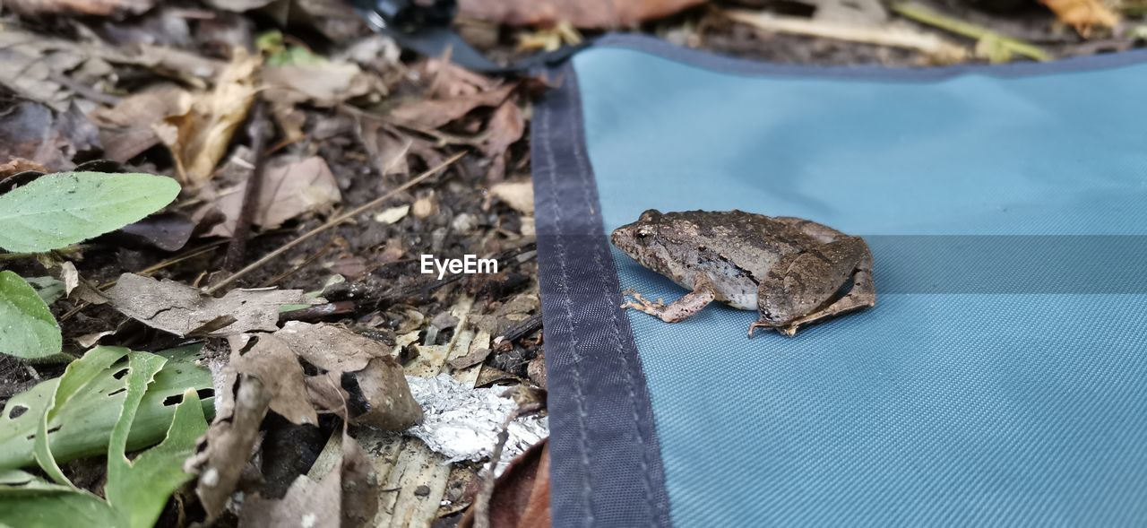 animal, animal themes, one animal, animal wildlife, animals in the wild, vertebrate, no people, focus on foreground, high angle view, day, plant part, leaf, reptile, lizard, mammal, close-up, nature, outdoors, pets, amphibian