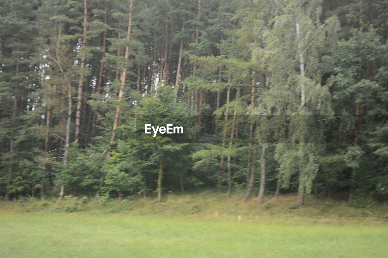 forest, tree, nature, no people, growth, day, beauty in nature, grass, outdoors, landscape, scenics, freshness