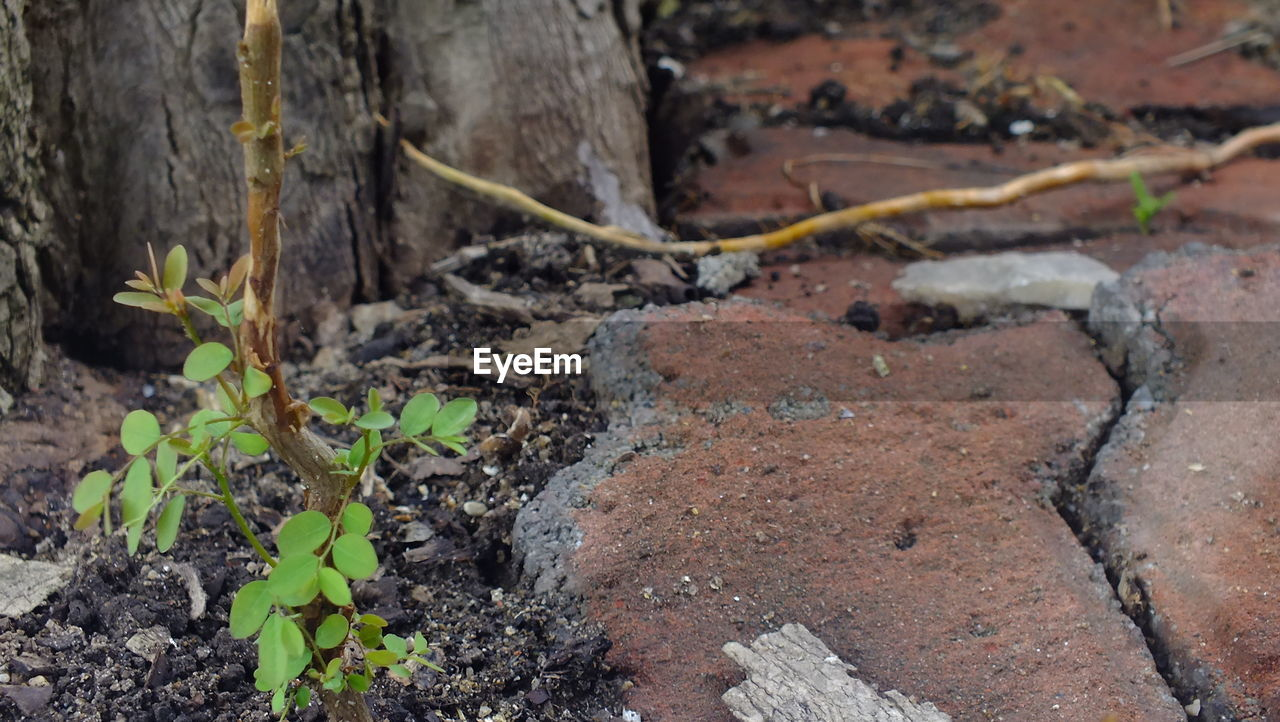 plant, nature, no people, leaf, day, outdoors, growth, close-up