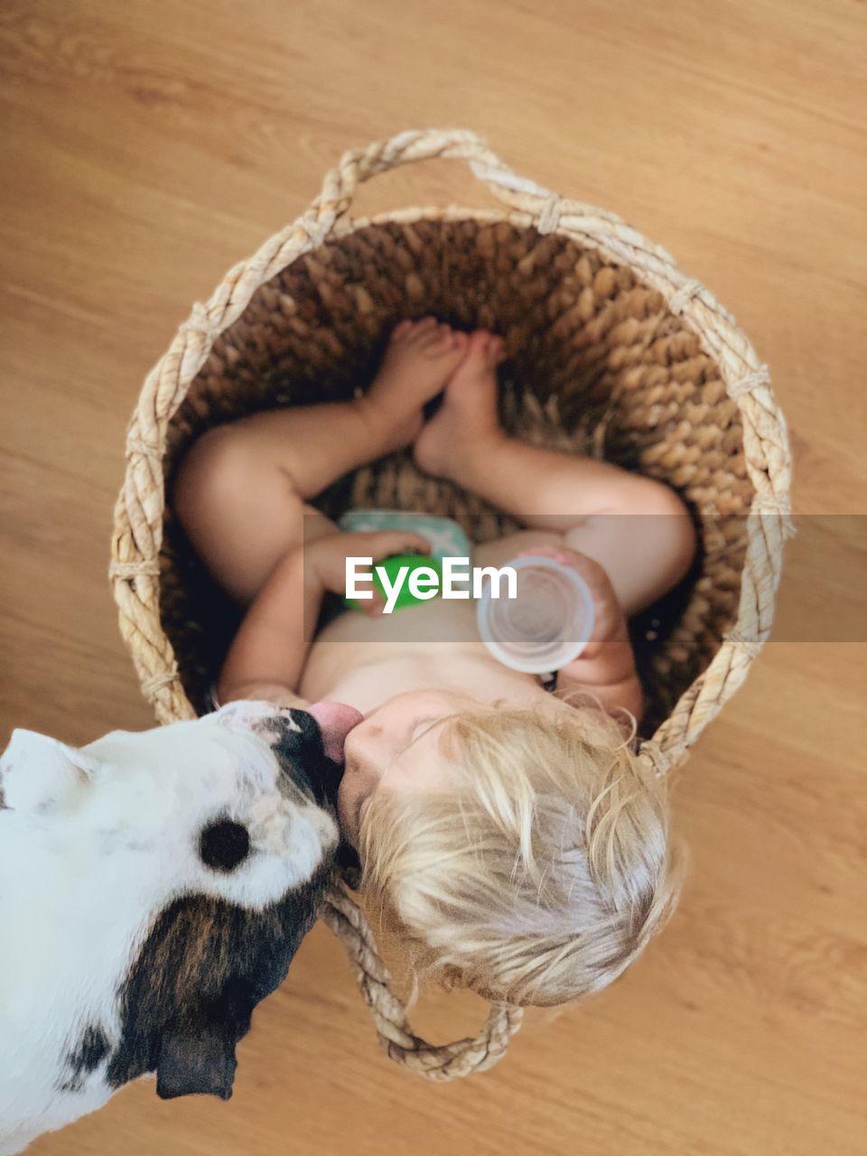 Directly above shot of dog liking cute boy