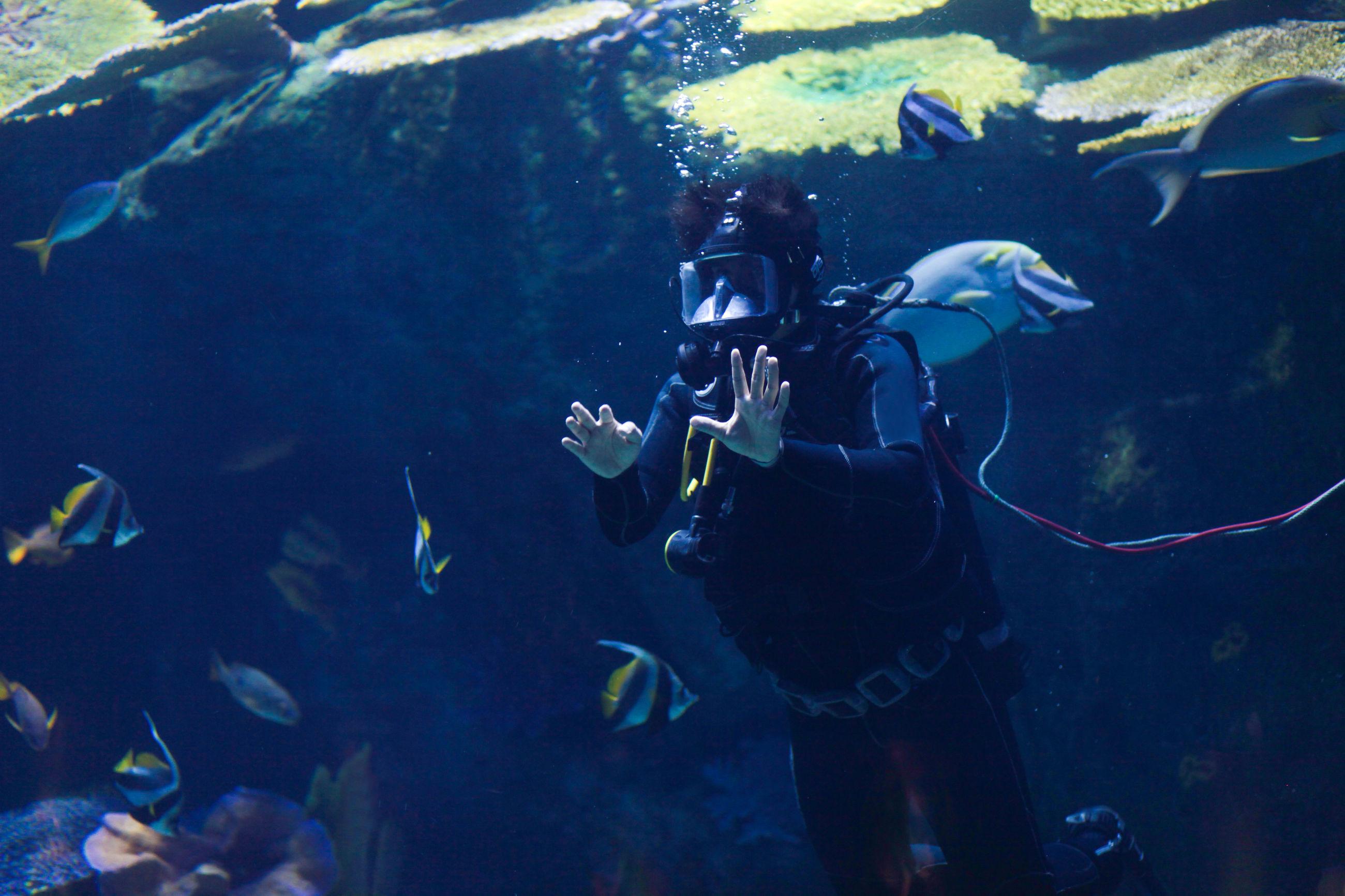 Man swimming undersea