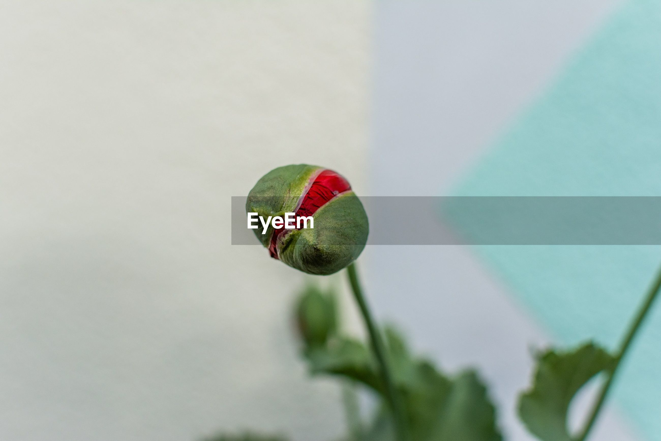 green color, red, close-up, low angle view, multi colored, hanging, focus on foreground, balloon, no people, fruit, day, green, selective focus, outdoors, nature, sky, blue, growth, single object, sphere