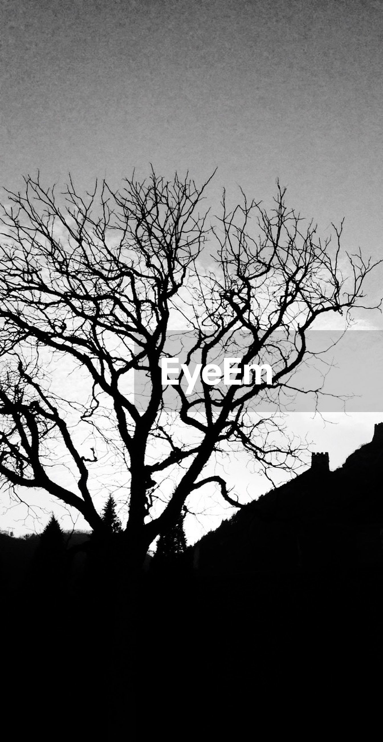 bare tree, silhouette, tree, branch, low angle view, clear sky, built structure, architecture, building exterior, sky, copy space, nature, dusk, tranquility, outdoors, no people, house, dark, beauty in nature, day
