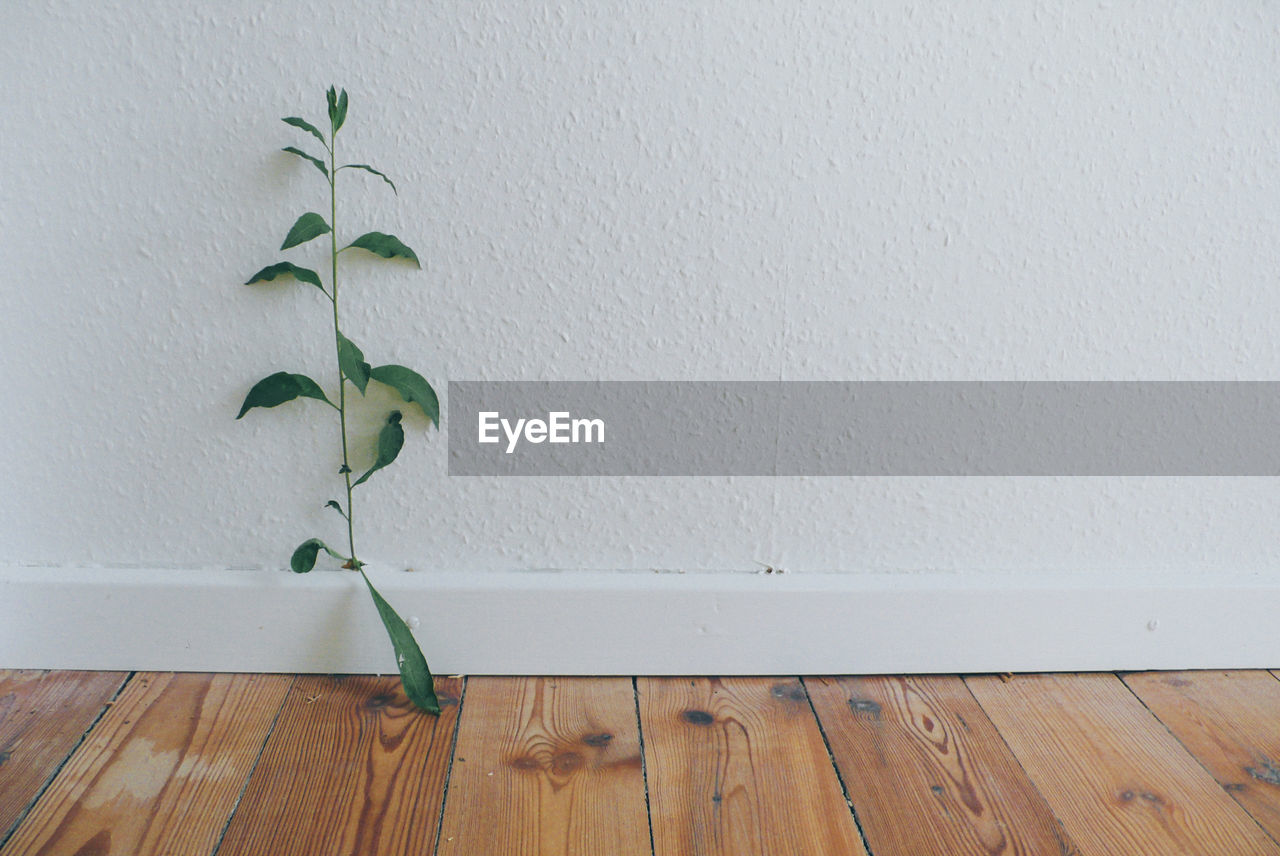 wall - building feature, indoors, leaf, white color, no people, green color, plant, hardwood floor, home interior, growth, day, close-up, nature