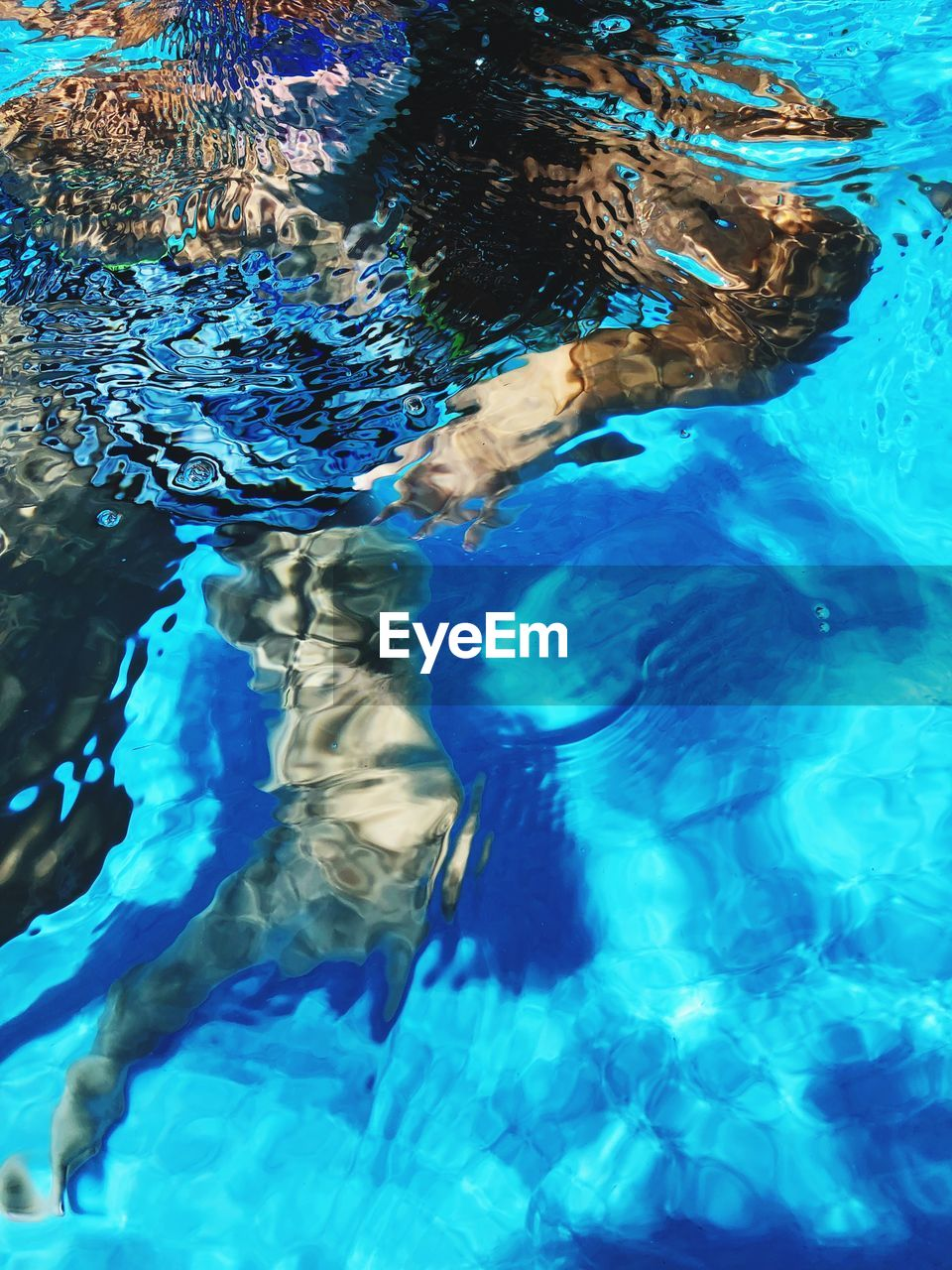 water, swimming, pool, swimming pool, blue, sea, underwater, nature, high angle view, day, rippled, swimwear, leisure activity, group of animals, outdoors, animals in the wild, animal themes, animal wildlife, one person, undersea, marine, purity
