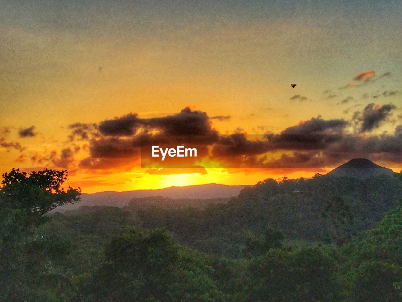 sunset, nature, beauty in nature, tranquil scene, tree, scenics, tranquility, mountain, sky, landscape, no people, outdoors, flying, day