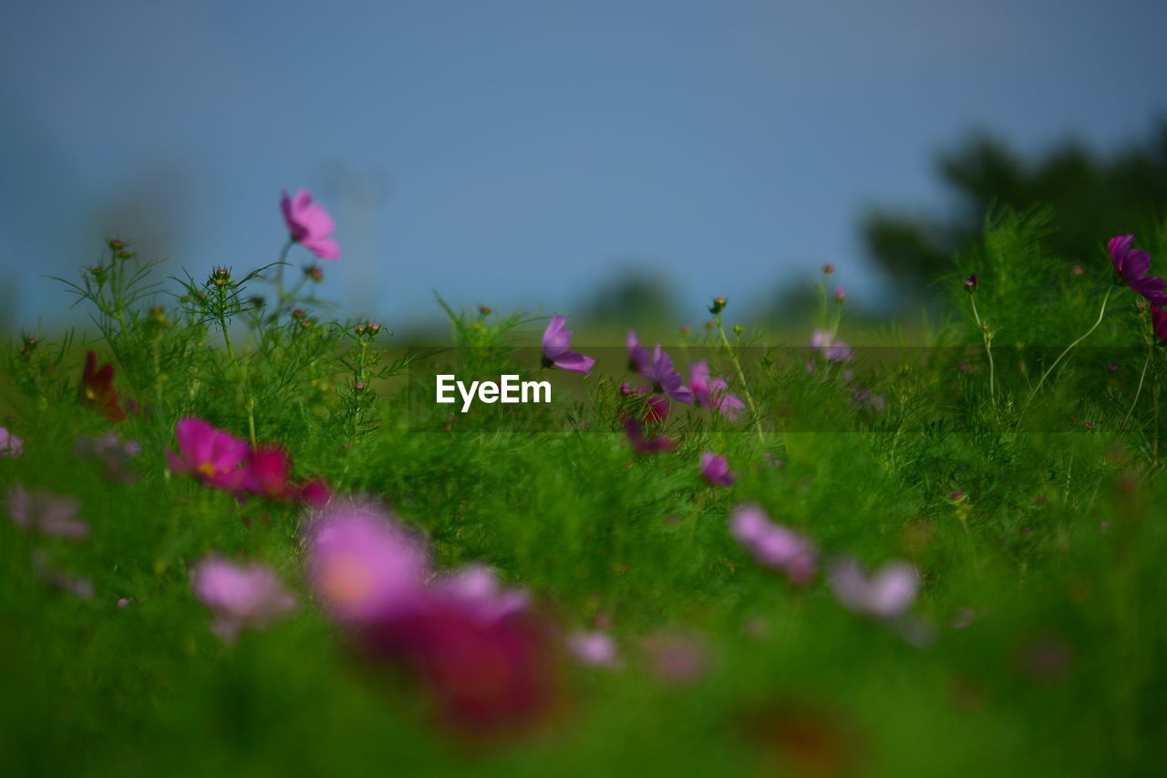 Idyllic View Of Meadow
