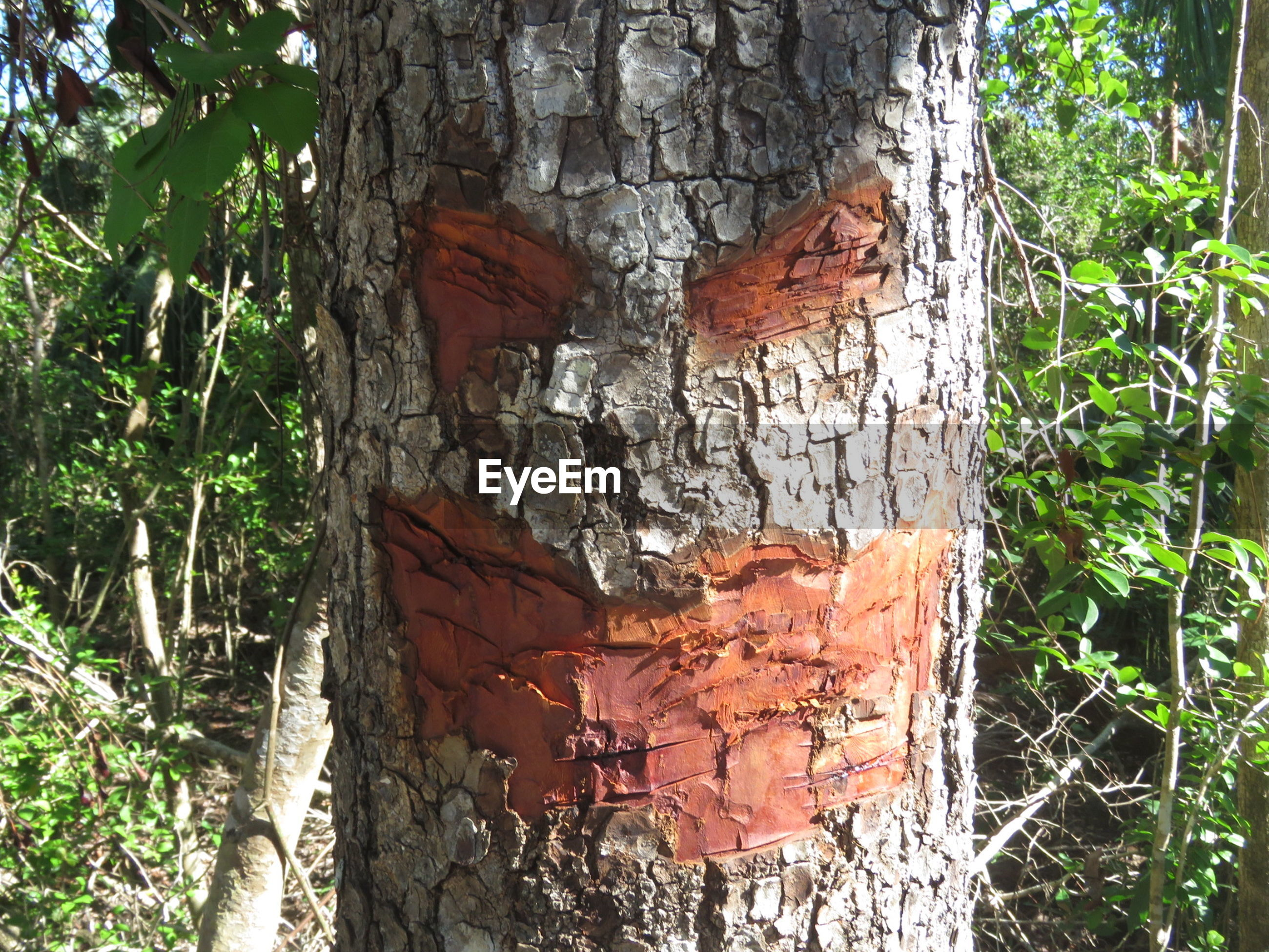 CLOSE-UP OF HORSE ON TREE TRUNK