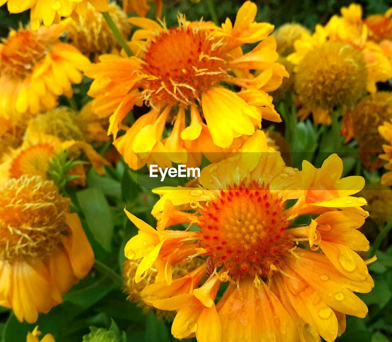 flower, petal, flower head, fragility, beauty in nature, freshness, yellow, nature, growth, plant, close-up, orange color, pollen, no people, blooming, springtime, day, outdoors