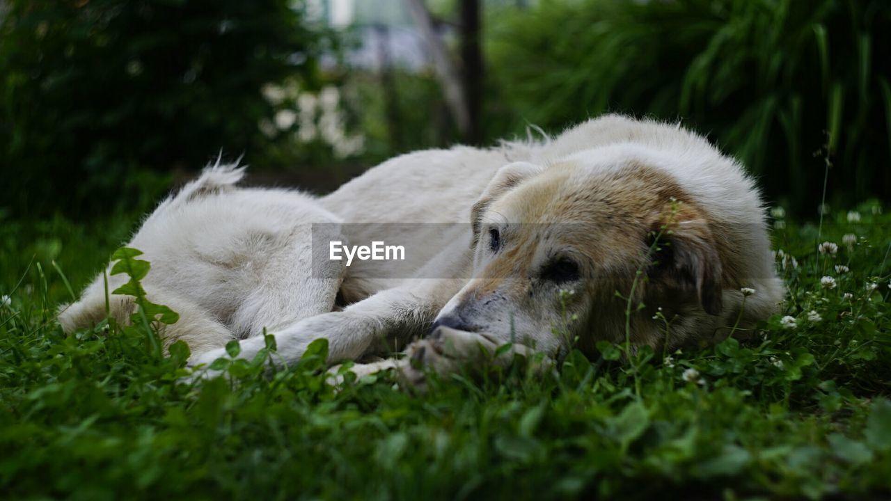 DOG IN A FIELD