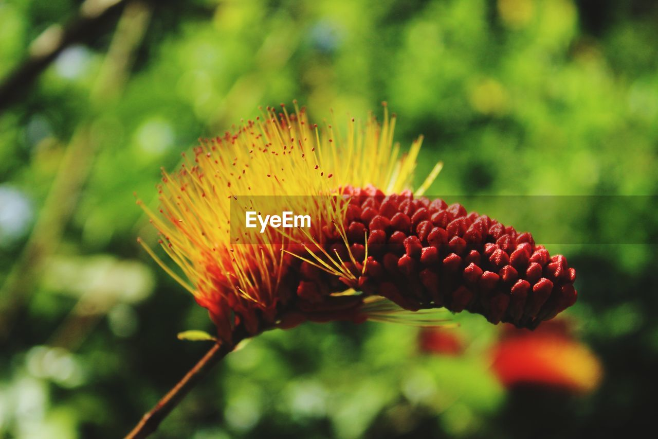 plant, growth, close-up, beauty in nature, focus on foreground, freshness, flower, no people, day, flowering plant, nature, fragility, vulnerability, flower head, fruit, outdoors, red, selective focus, green color, plant stem