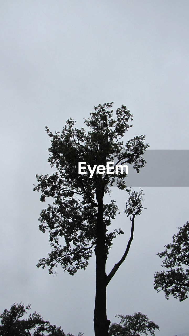 tree, nature, growth, low angle view, sky, tranquility, no people, clear sky, outdoors, scenics, branch, day, beauty in nature, lone, hope, high