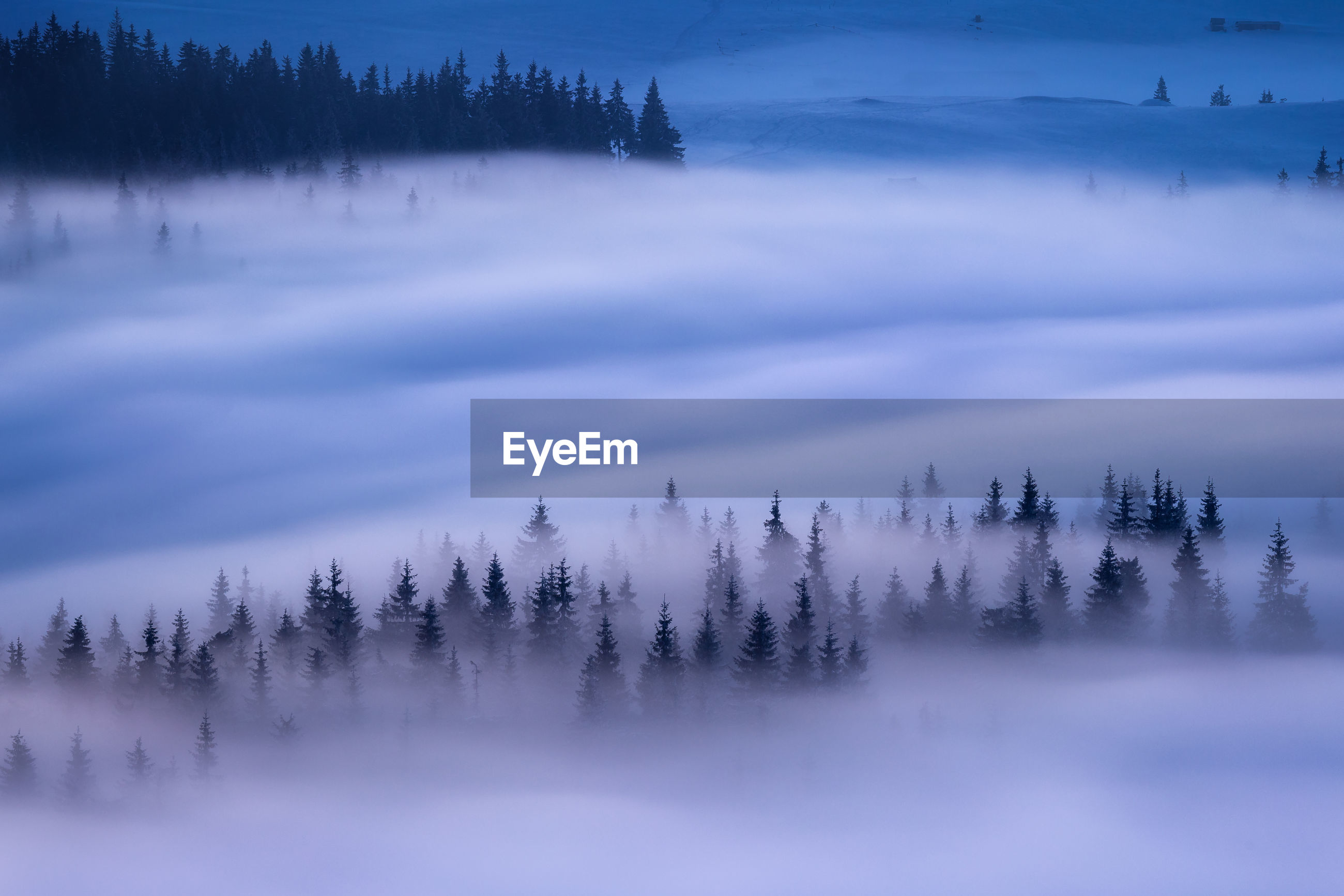 Trees in forest during winter against sky at dawn