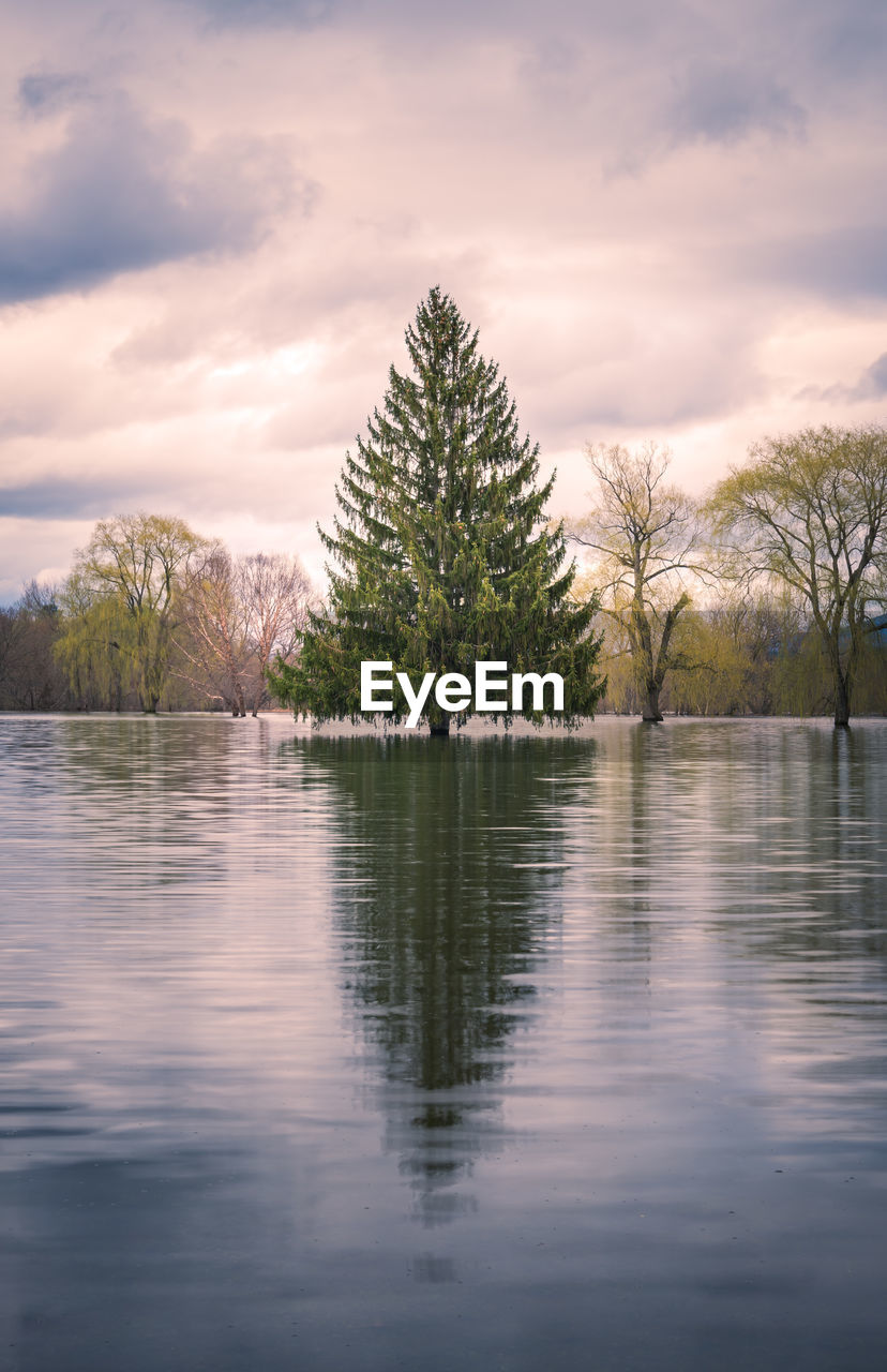 tree, water, plant, sky, cloud - sky, tranquility, tranquil scene, lake, scenics - nature, reflection, nature, beauty in nature, waterfront, no people, non-urban scene, growth, day, idyllic, outdoors, coniferous tree