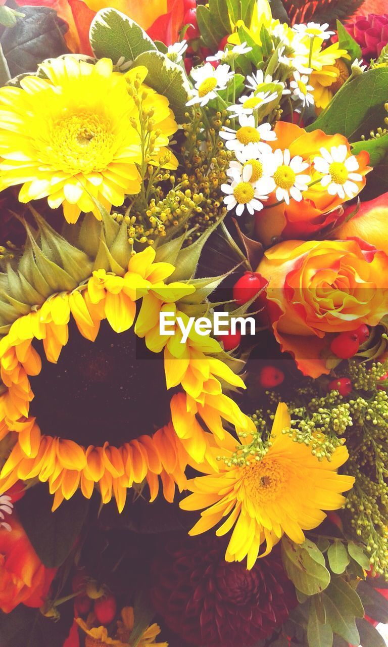 flower, yellow, fragility, freshness, petal, beauty in nature, flower head, nature, growth, no people, close-up, bouquet, blooming, outdoors, day