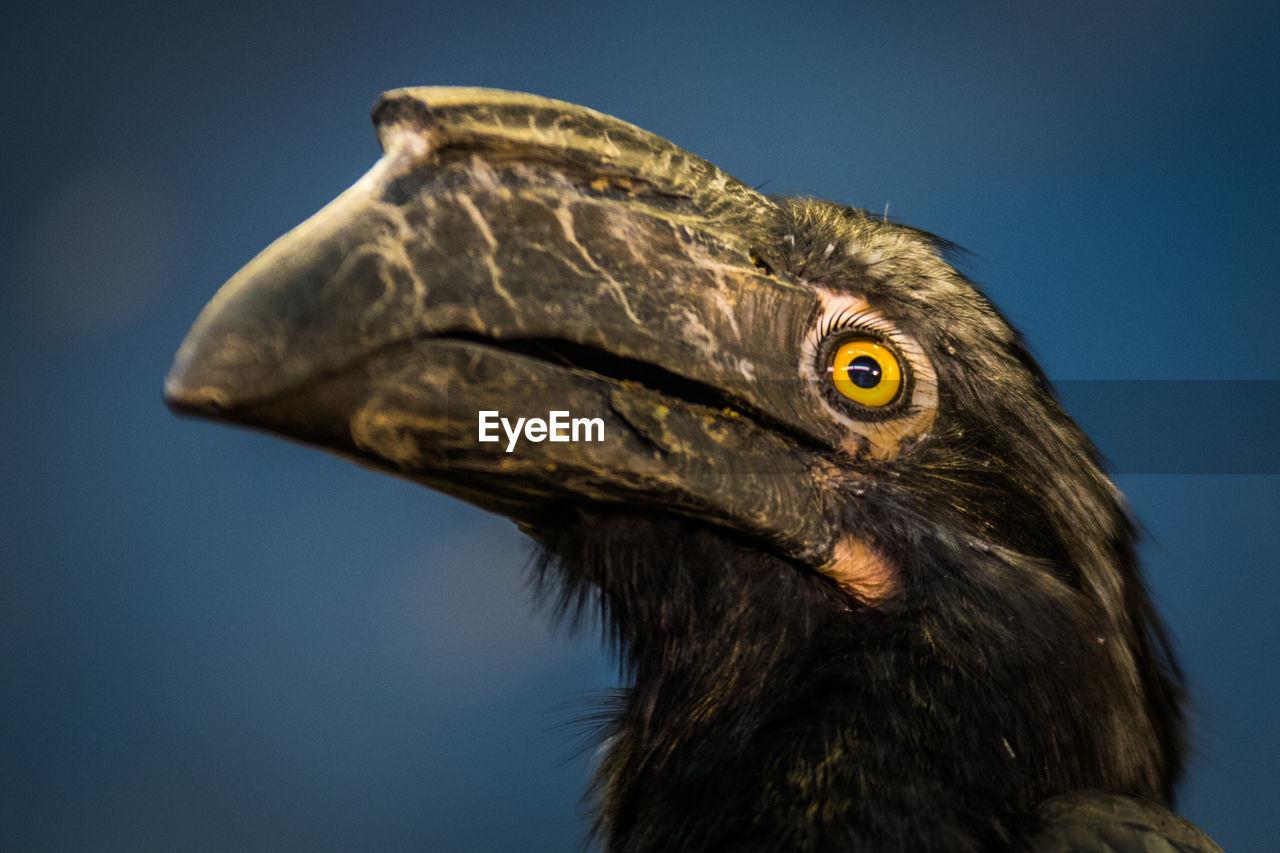 Close-up of hornbill against sky