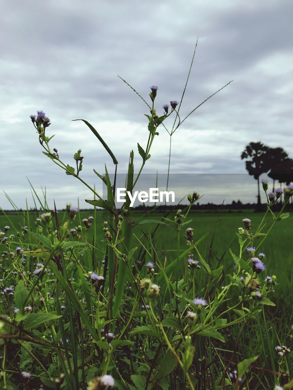 plant, growth, sky, beauty in nature, cloud - sky, nature, field, land, flower, green color, flowering plant, grass, freshness, no people, tranquility, day, environment, tranquil scene, landscape, close-up, outdoors, blade of grass
