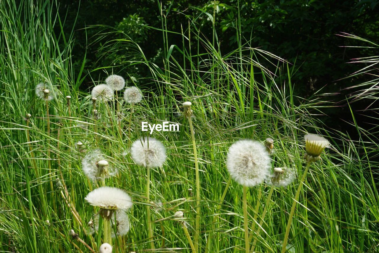 growth, nature, grass, flower, plant, no people, beauty in nature, fragility, outdoors, field, day, close-up, freshness, flower head