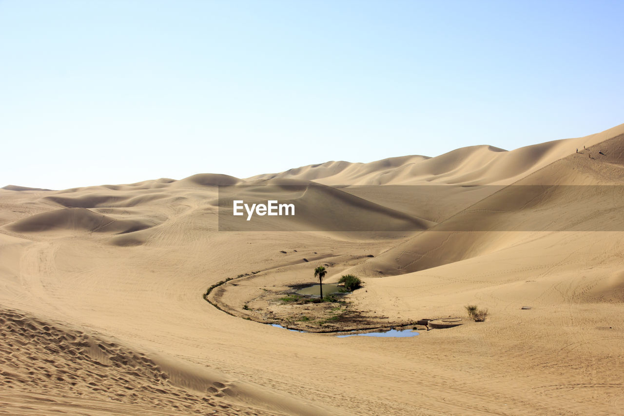Arid Climate Clear Sky Desert Extreme Terrain Landscape Nature Oasis Palm Tree Sand Sand Dune Sunlight The Great Outdoors - 2017 EyeEm Awards