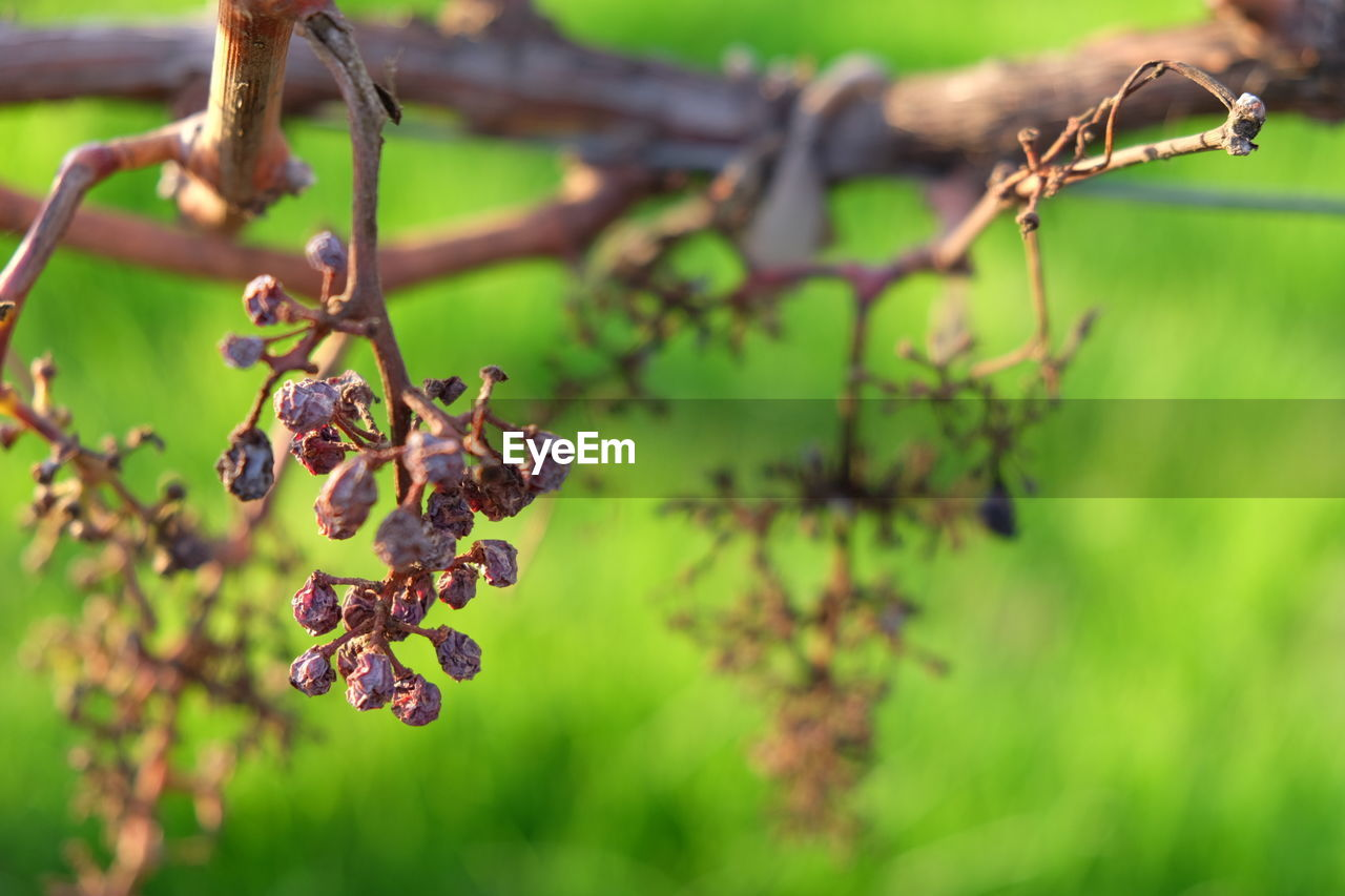 plant, focus on foreground, growth, close-up, nature, day, no people, beauty in nature, selective focus, tree, tranquility, outdoors, plant part, green color, leaf, flower, vulnerability, fragility, flowering plant, branch