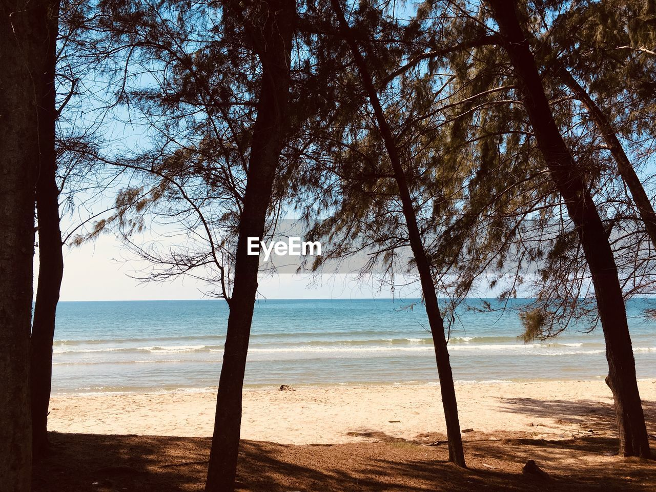 land, water, beach, sea, tree, beauty in nature, sky, plant, sand, horizon, horizon over water, tranquility, scenics - nature, nature, tranquil scene, tree trunk, day, trunk, no people, outdoors