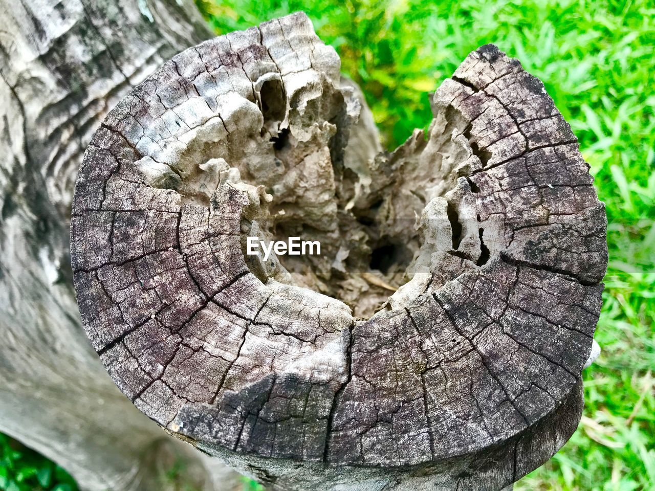tree, close-up, plant, textured, tree trunk, wood - material, bark, nature, trunk, no people, day, pattern, rough, tree stump, selective focus, wood, outdoors, focus on foreground, natural pattern, growth, tree ring