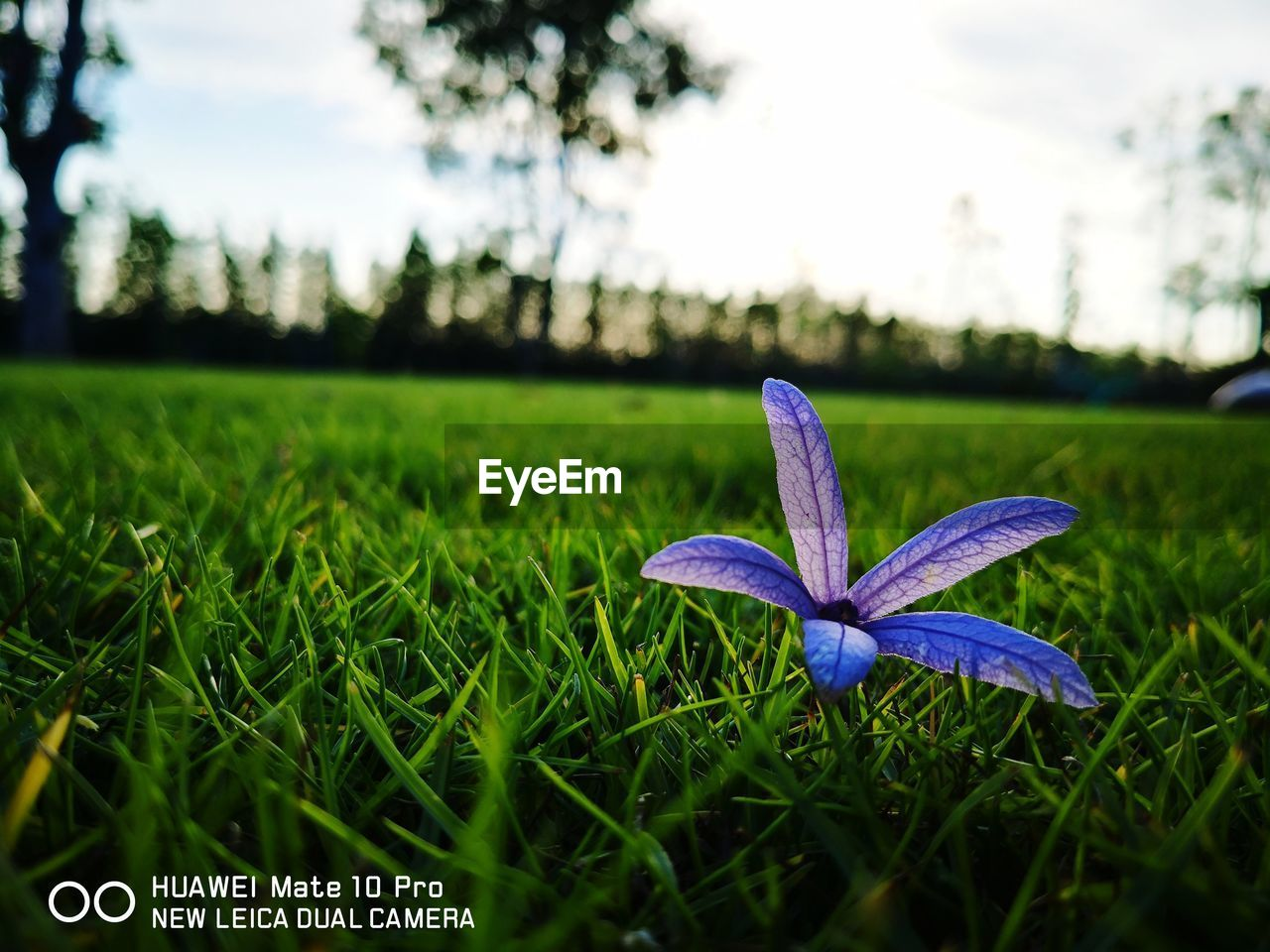 grass, growth, nature, green color, field, focus on foreground, flower, outdoors, day, beauty in nature, close-up, no people, fragility, freshness, plant, flower head, tree, sky