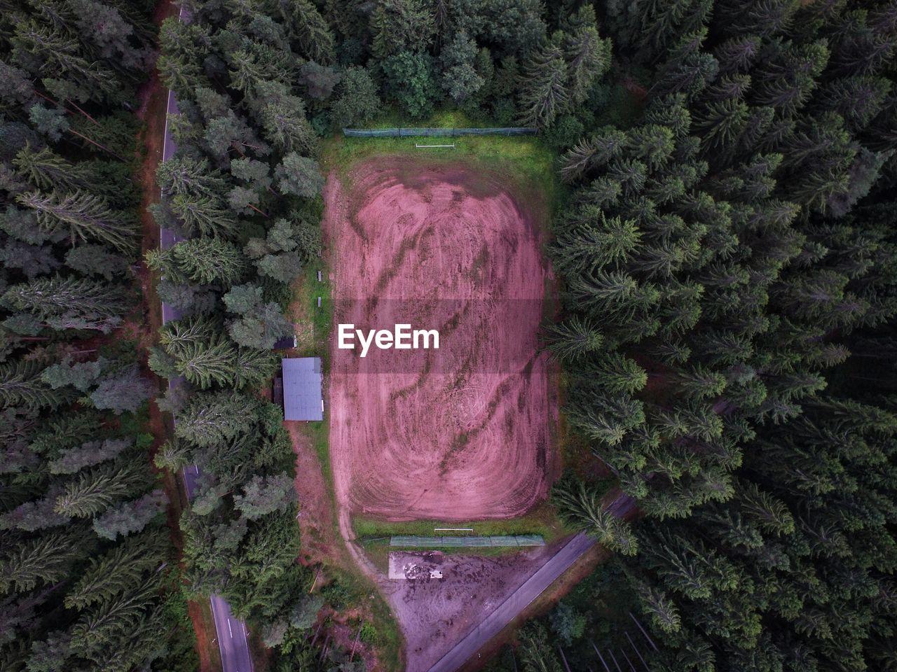 Trees around field