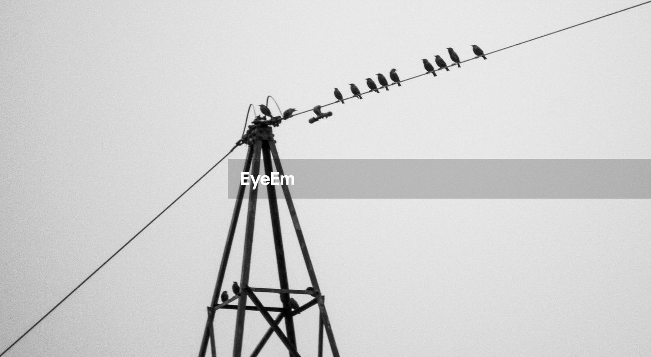 sky, cable, clear sky, low angle view, no people, connection, bird, animal themes, vertebrate, animal, copy space, technology, nature, animals in the wild, metal, animal wildlife, electricity, power line, day, outdoors, power supply, flock of birds, telephone line