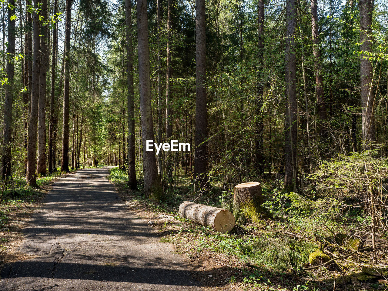 tree, forest, plant, land, mammal, animal, woodland, nature, no people, animal themes, one animal, day, road, growth, tranquility, the way forward, direction, tree trunk, sunlight, trunk, outdoors