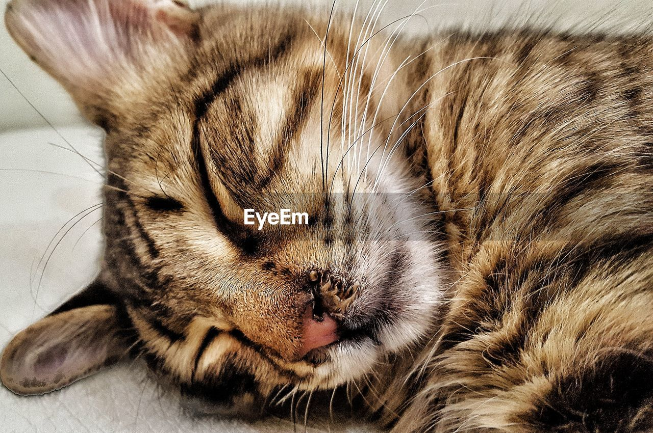 pets, domestic cat, one animal, animal themes, eyes closed, domestic animals, sleeping, mammal, whisker, no people, feline, indoors, close-up, lying down, relaxation, day