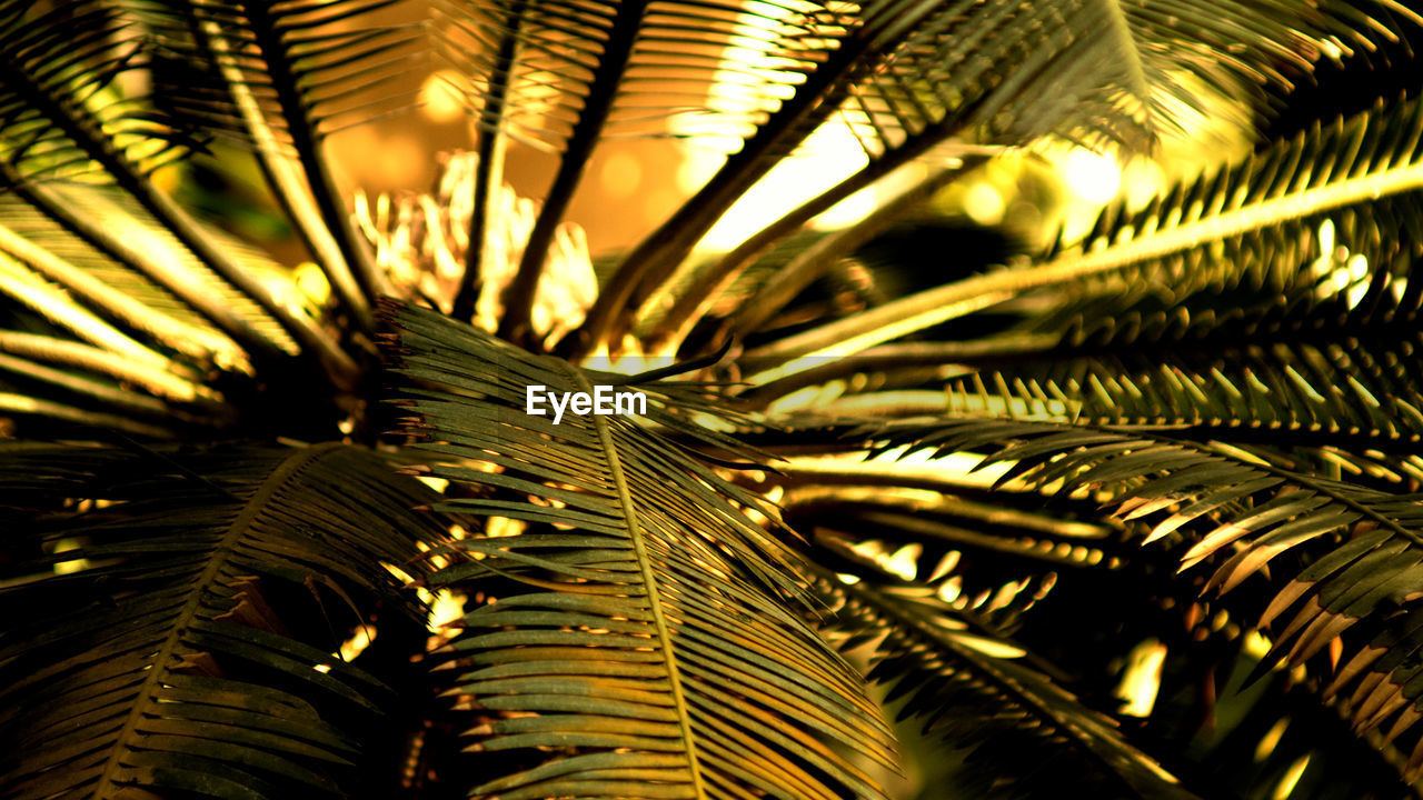 growth, no people, nature, close-up, frond, leaf, beauty in nature, outdoors, tree, day