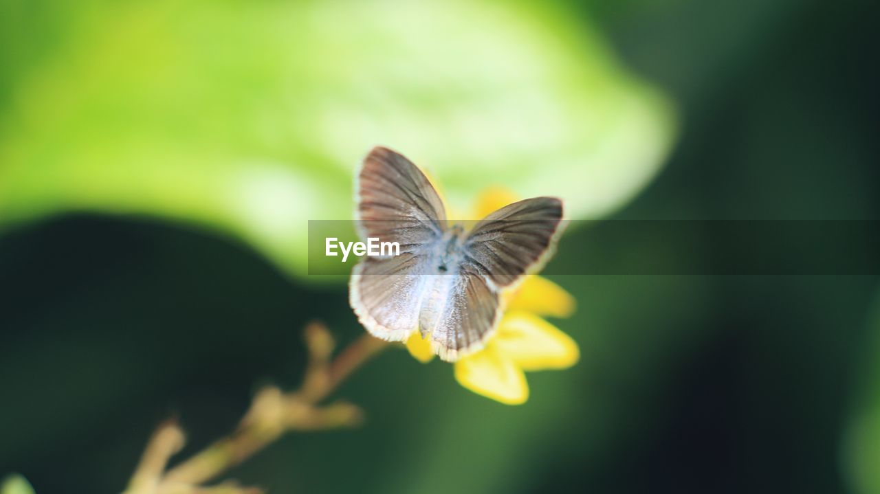 one animal, animal wildlife, animals in the wild, animal themes, beauty in nature, animal, close-up, flying, vulnerability, plant, fragility, focus on foreground, growth, selective focus, no people, nature, day, flower, animal wing, insect, flower head, butterfly - insect, butterfly, pollination