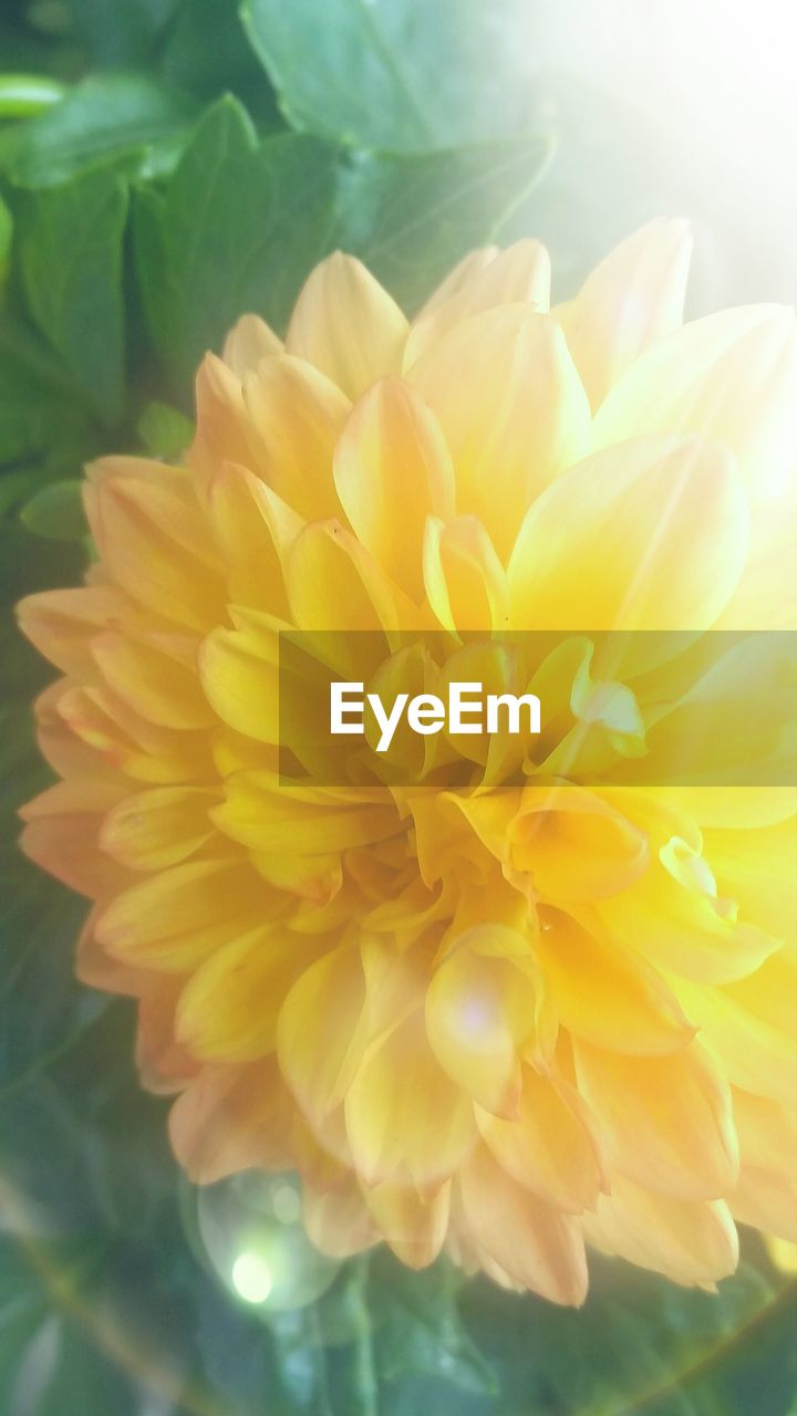 flower, petal, freshness, fragility, flower head, beauty in nature, yellow, nature, close-up, no people, plant, day, growth, outdoors, blooming