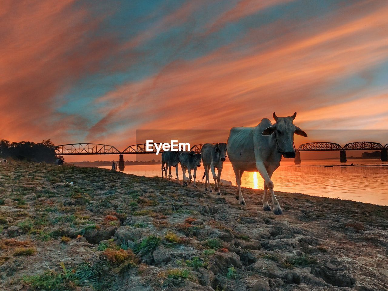 sky, sunset, mammal, animal themes, animal, cloud - sky, domestic animals, nature, vertebrate, orange color, domestic, beauty in nature, no people, land, pets, group of animals, scenics - nature, built structure, rock, solid, outdoors, herbivorous