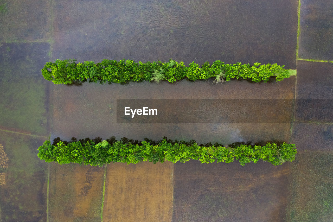 green color, plant, growth, no people, day, nature, leaf, plant part, wall - building feature, close-up, outdoors, freshness, beauty in nature, architecture, high angle view, wall, potted plant, built structure, communication, wood - material