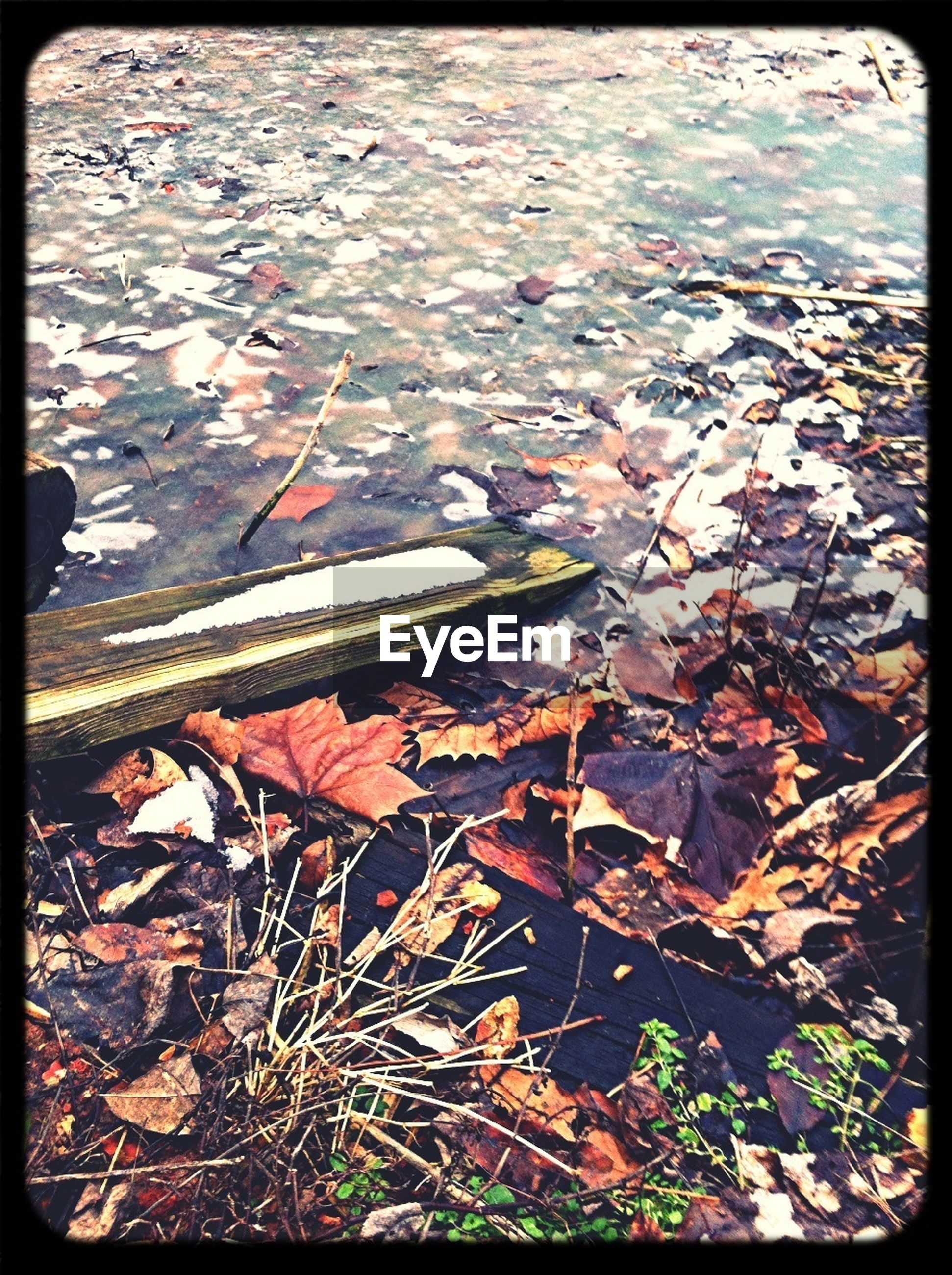 transfer print, auto post production filter, high angle view, water, leaf, autumn, nature, season, day, puddle, outdoors, tranquility, reflection, leaves, no people, change, elevated view, dry, close-up, lake